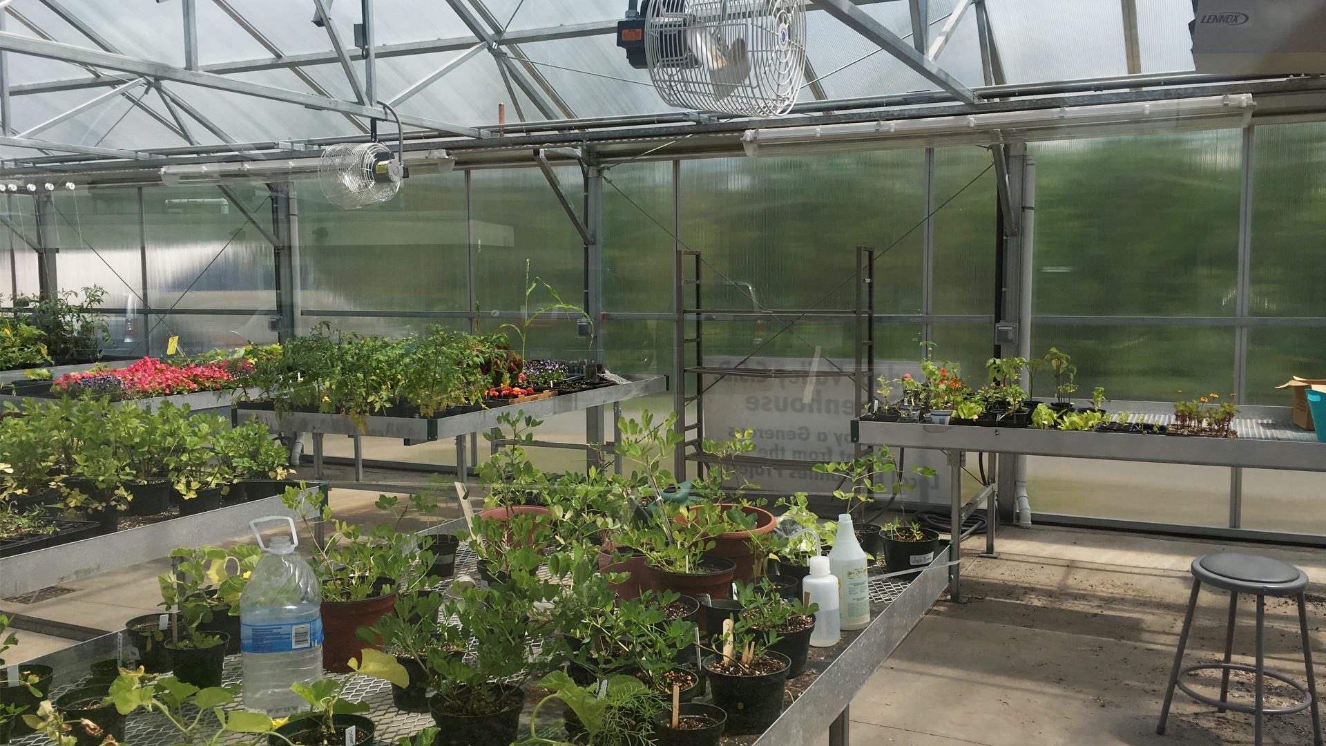 RVCSD Greenhouse Interior With Plants